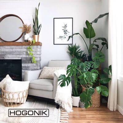 دکوراسیون داخلی با گیاهان آپارتمانی
