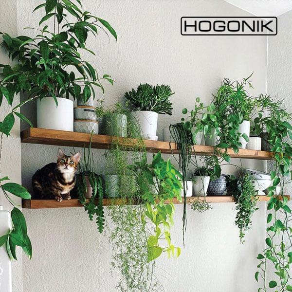 استفاده از گیاهان برای پر کردن دیوار خالی